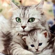 Coletânea Cats 01